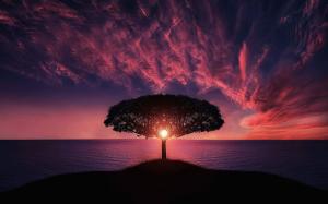 coucher de soleil devant un arbre