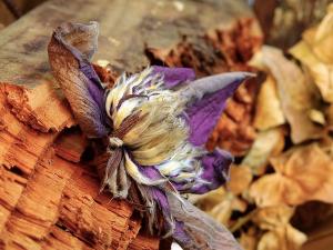 racine bois et fleur violette